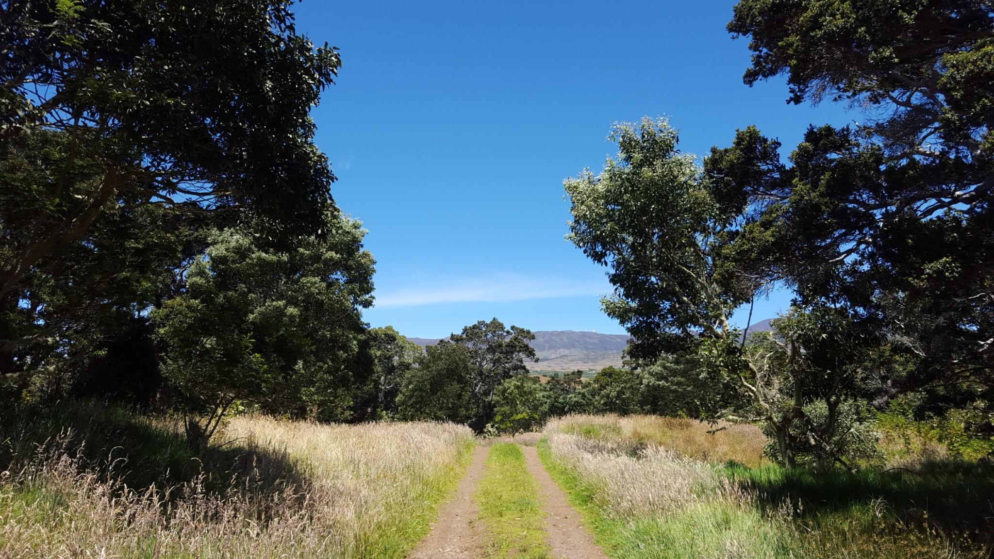 12 23hakalau Trail