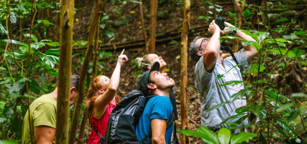 OAHU BIRDING TOURS