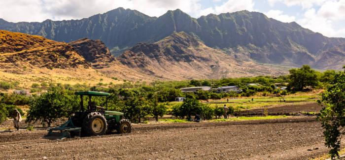 Oahu Hawaii Farm Tour