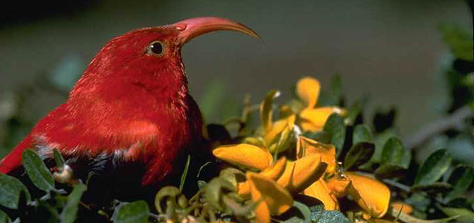 main-birding