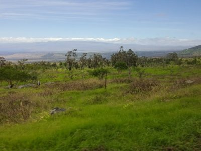 Outplanting At Pu'u Wa'a Wa'a