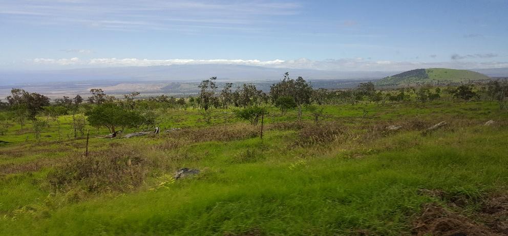 Puuwaawaawide